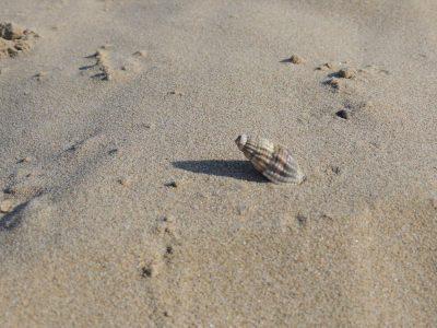 executive-la-fiorita-spiaggia